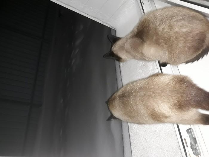 Так по-кошачьи Кот, Мороз, Окно, Нерешительность