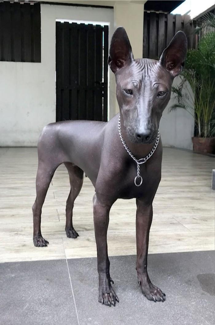Ктожегопосадит,онжепамятник… ) Собака, Филиппины, Памятник, Длиннопост, Видео