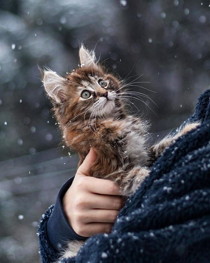 Кто здесь? Кот, Умиление, Милота, Снег, Котомафия, Удивление, Зима