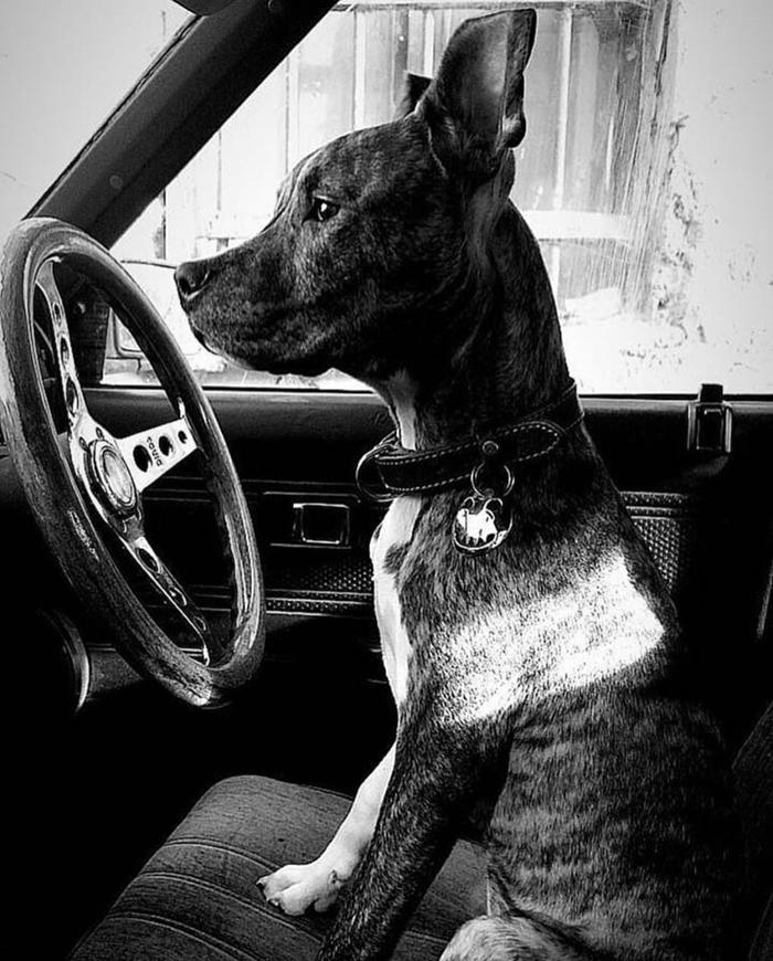Одинокий мужчина с собачкой оказывается... Отношения, Собака, Фотография, Социальные сети