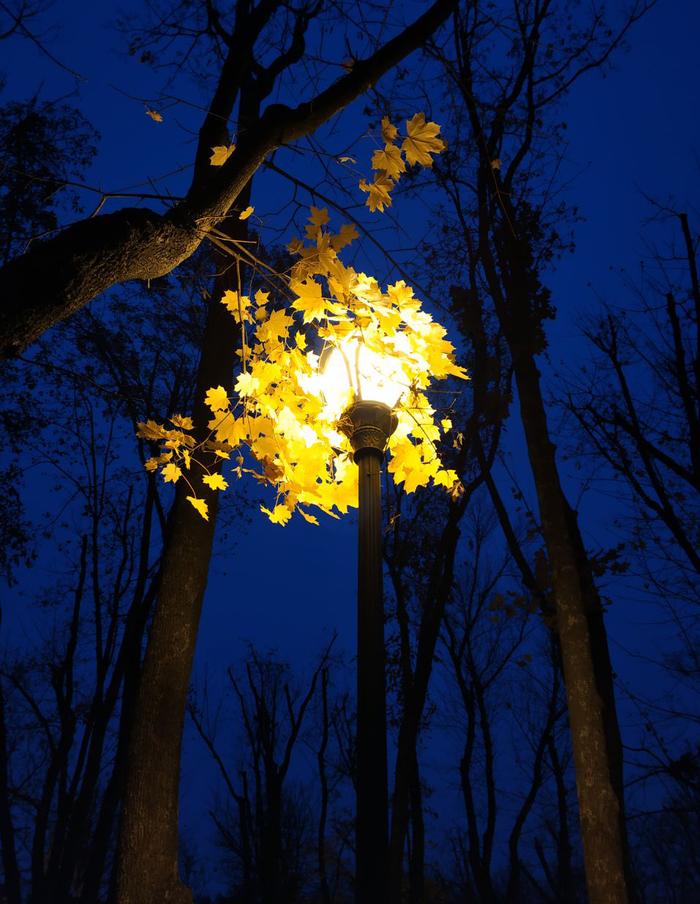 Ночь. Улица. Фонарь. Мобильная фотография, Начинающий фотограф, Осень, Красота