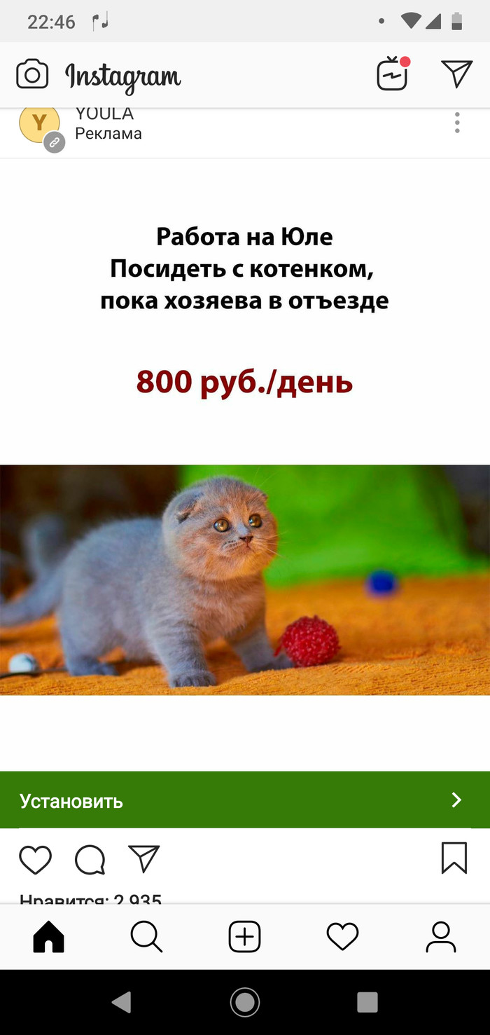 Реклама на сайте ) Реклама, Кот, Сиделка, Длиннопост, Юла