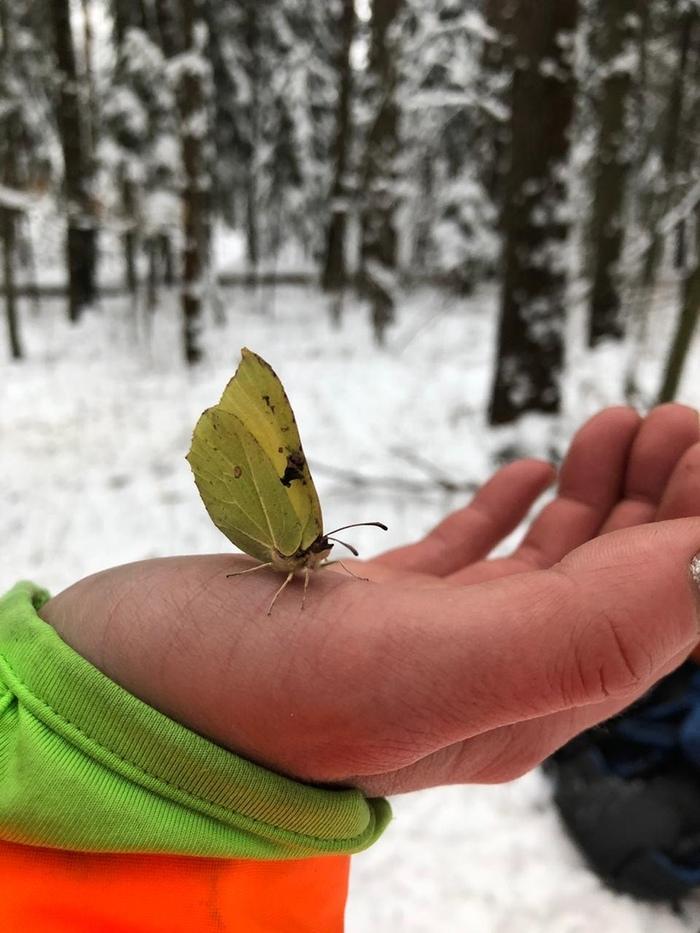 Чудо 30 декабря Зима, Бабочка, Пикник, Снег, Энтомология, Находка, Видео, Длиннопост, Природа