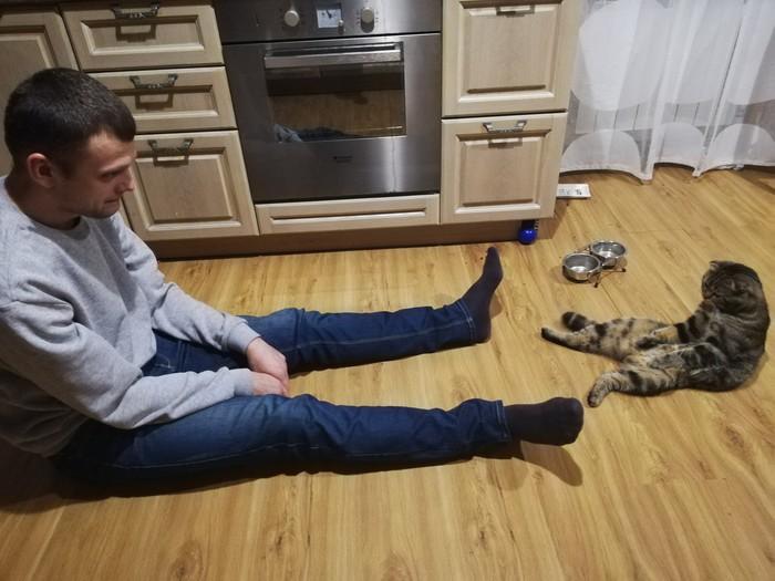 Мой кот сломался) Кот, Шотландская вислоухая, Домашние животные