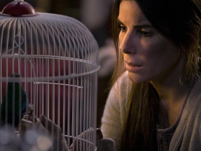 «Птичий короб»: самый популярный фильм Netflix и его отличия от книги. Птичий короб, Джош Малерман, Фильмы, Книги, Журнал мир фантастики, Сандра Буллок, Длиннопост