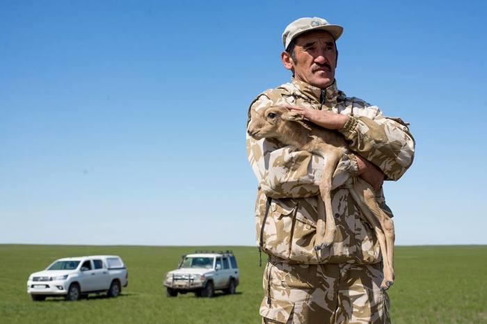 Браконьеры убили инспектора охранявшего сайгу в Казахстане Казахстан, Браконьеры, Сайга, Охрана природы, Беспредел, Без рейтинга, Убийство, Видео, Длиннопост