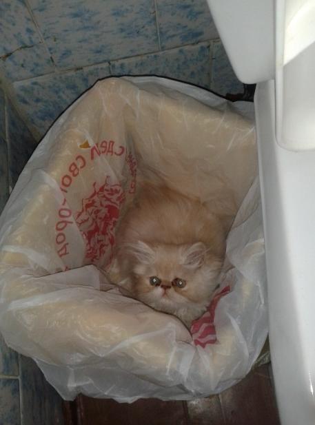 Кто выбросил кота??? (он сам туда залез)