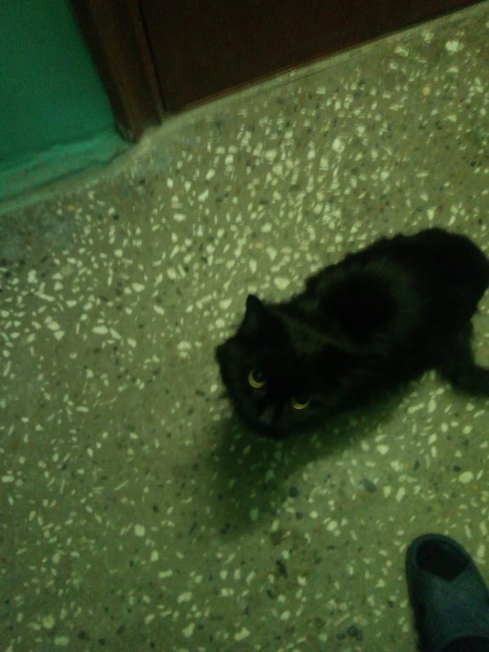 Пикабу, спаси и сохрани! Помощь животным, Найден кот, Томск, Без рейтинга, Длиннопост, Кот