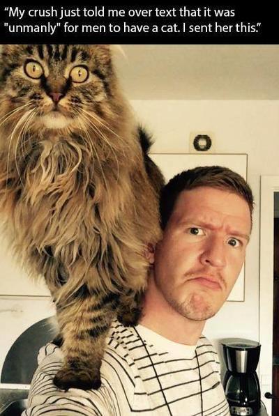 Моя девушка написала, что завести кота - это не по-мужски. Я отправил ей это.