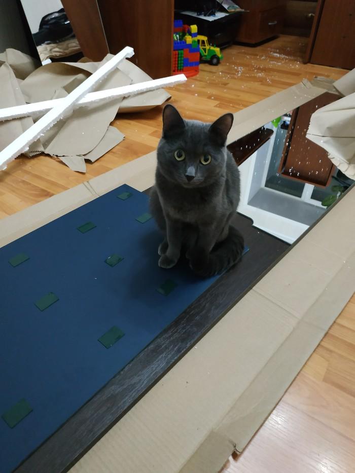 Кошка помогает клеить мне зеркала. Зеркало, Про котиков, Длиннопост, Кот