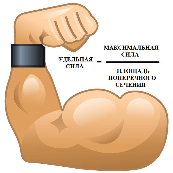 Всё интересное о массе и силе мышц Спорт, Тренер, Спортивные советы, Тренировка, Исследование, Сила, Масса, Мышцы, Длиннопост