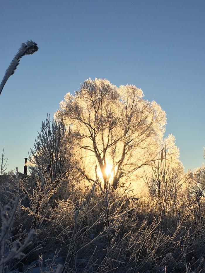 Морозное утро! Самое яркое солнце - этой зимой! Зима, Мороз, Пейзаж, Картинки, Длиннопост