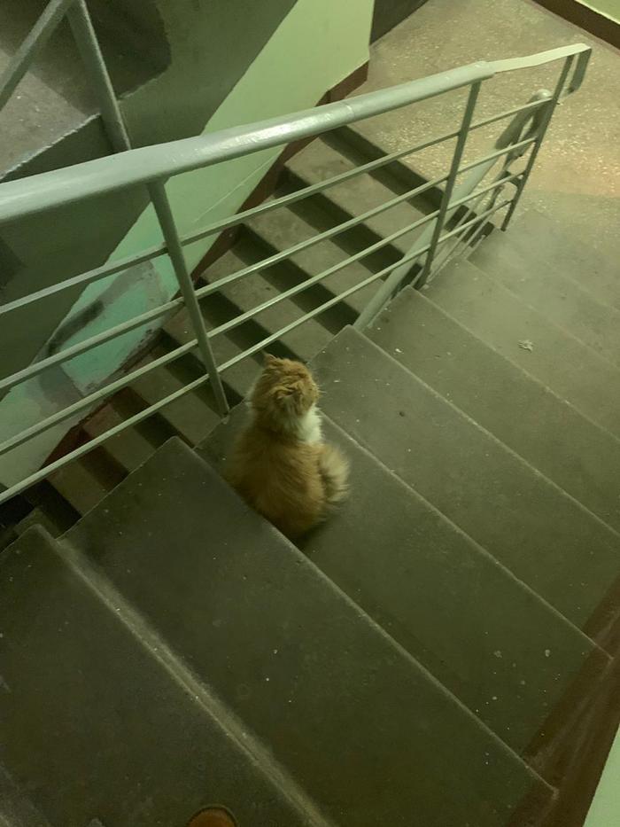 Найден котик [дом котику найден] Кот, В добрые руки, Найденыш, Видео, Длиннопост, Москва, Без рейтинга