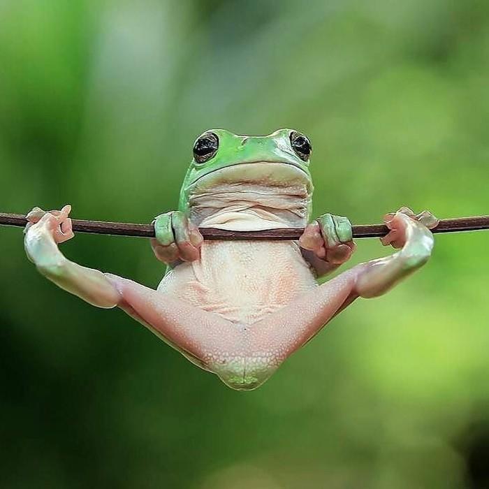 Гимнастика Фотография, Животные, Лягушка