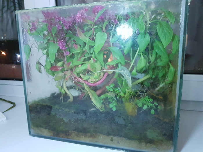 Экосистема замкнутая - Байкал #8 Байкальская, Байкал, Экосистема, Растения, Растения на балконе, Комнатные растения, Эксперимент, Длиннопост