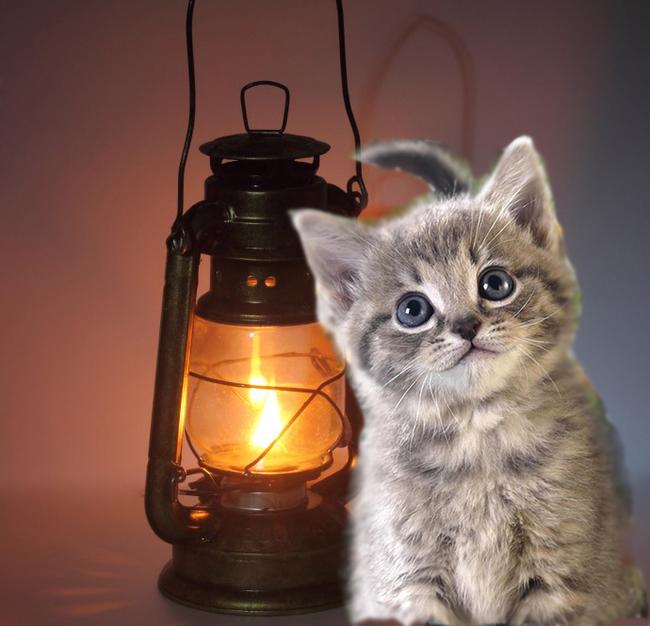 Котоламповая шкала Кот с лампой, Шкала, Процесс, Без рейтинга, Длиннопост