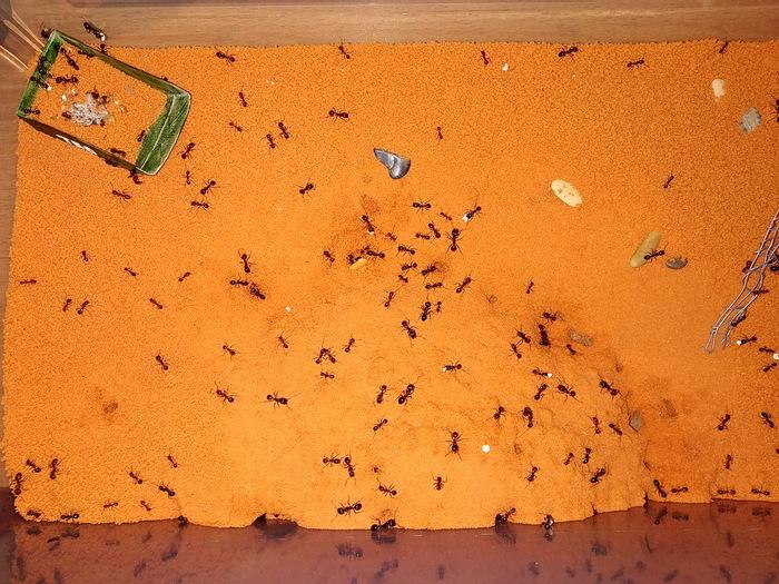 Два дня из жизни муравьёв Формикарий, Муравьи, Длиннопост