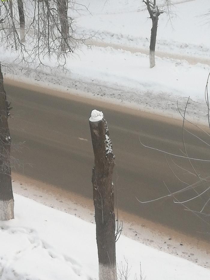 Если приглядеться, снег на срубленном дереве выглядит как спящий котенок)