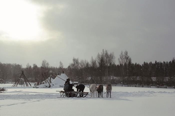 В объективе покатушки на северных оленях! Ну здравствуй северный олень, Олень, Начинающий фотограф, Снег, Север, Длиннопост