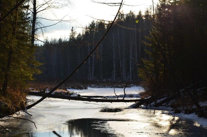 Природа и охота. Природа, Лес, Охота, Красота Урала, Длиннопост