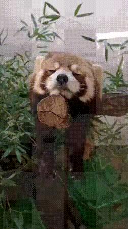 Все мы немного панды