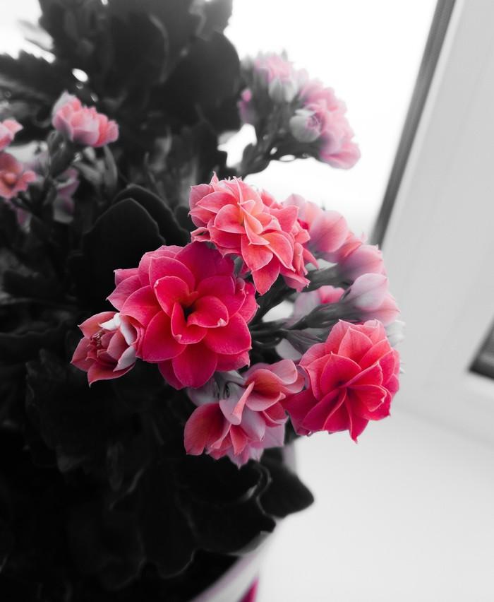 Цветы Мобильная фотография, Фотография, Начинающий фотограф, Цветы, Хочу критики
