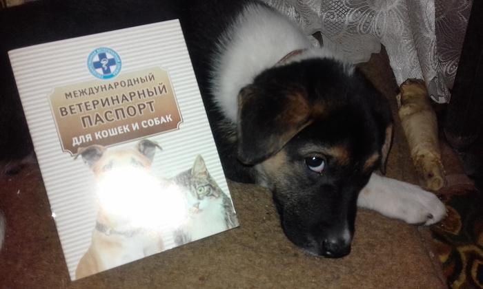 Тяпа.начало Собака, Домашние животные