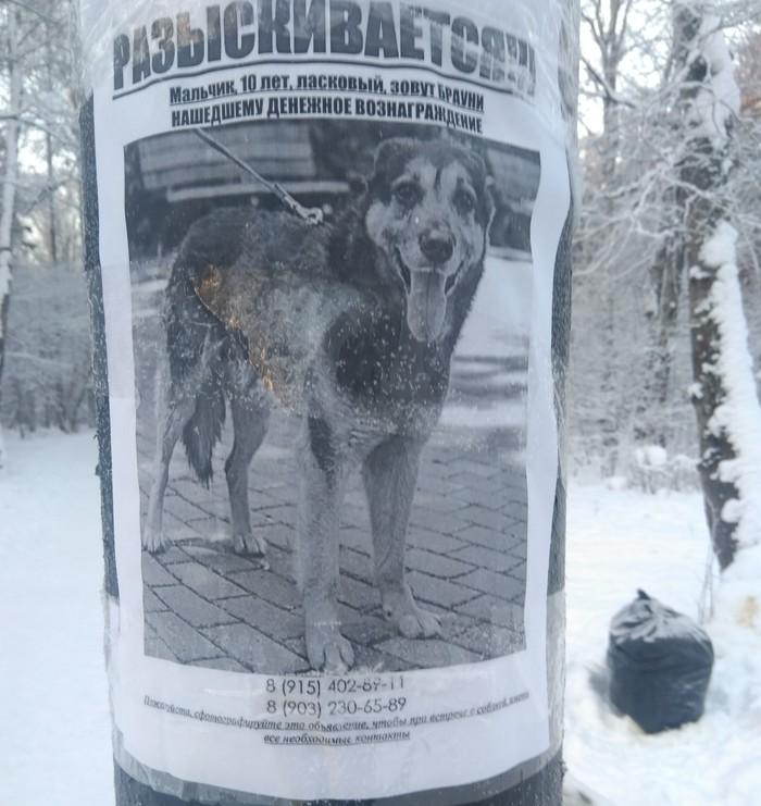 Поможем найти собачку, чтобы перестали на каждом столбе клеить свои бумажки (г. Зеленоград) Собака, Объявление, Пропала собака, Без рейтинга