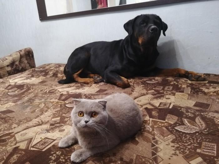 Живность Кот, Собака, Милота, Длиннопост