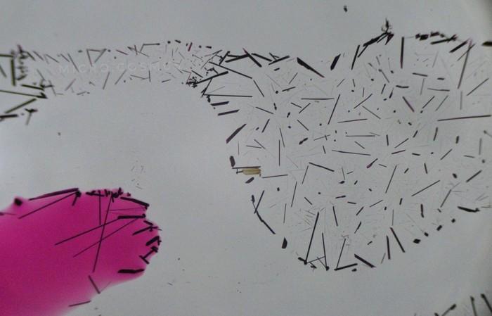 Марганцовка под микроскопом Микросъёмка, Микроскоп, Марганцовка, Запрет, Длиннопост