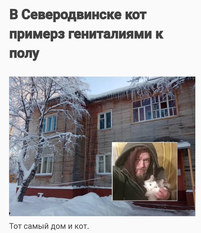 Не лижите бубенчики на морозе Северодвинск, Кот, Мороз, Бубенчики, Боль, Новости