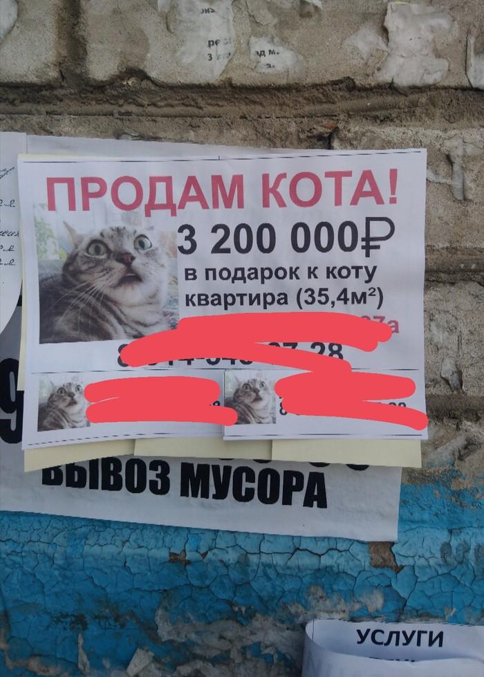 Дорогой котик