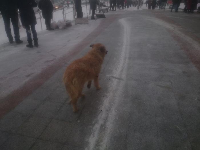 """Около метро """"Пражская"""" (Москва) замерзает собака. Москва, Собака, Помощь животным, Длиннопост"""