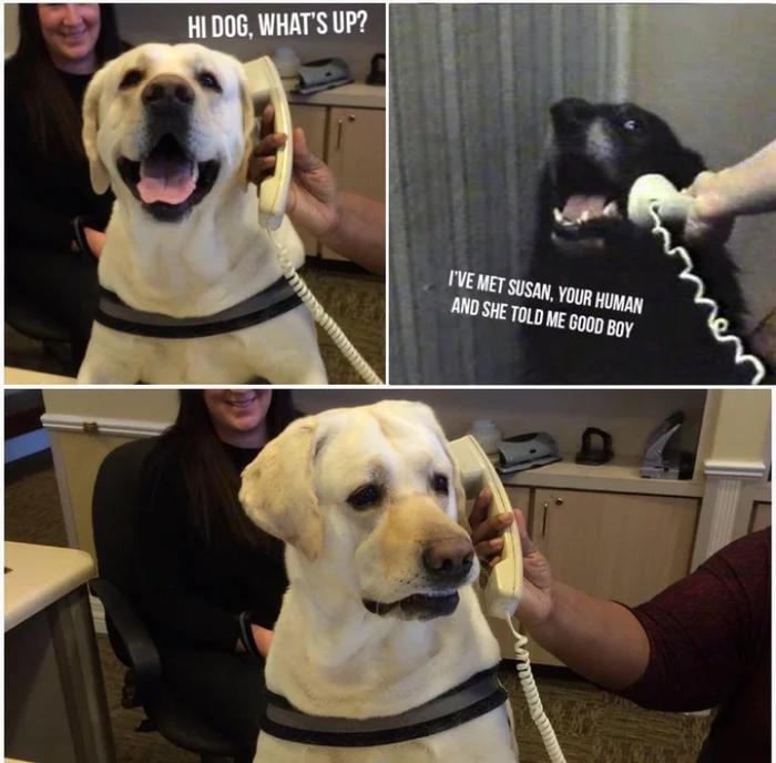Хороший мальчик Собака, Телефонный разговор