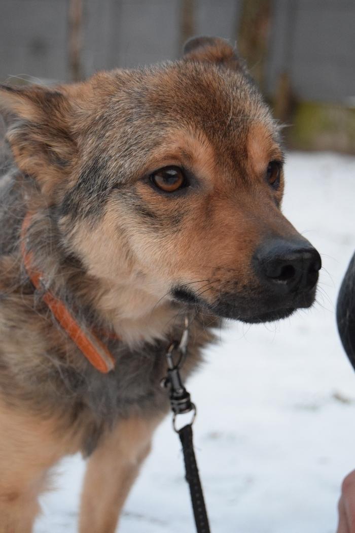Собакевич ищет семью Собака, Помощь животным, В добрые руки, Беларусь, Гродно, Доброта, Спасение животных, Длиннопост, Без рейтинга