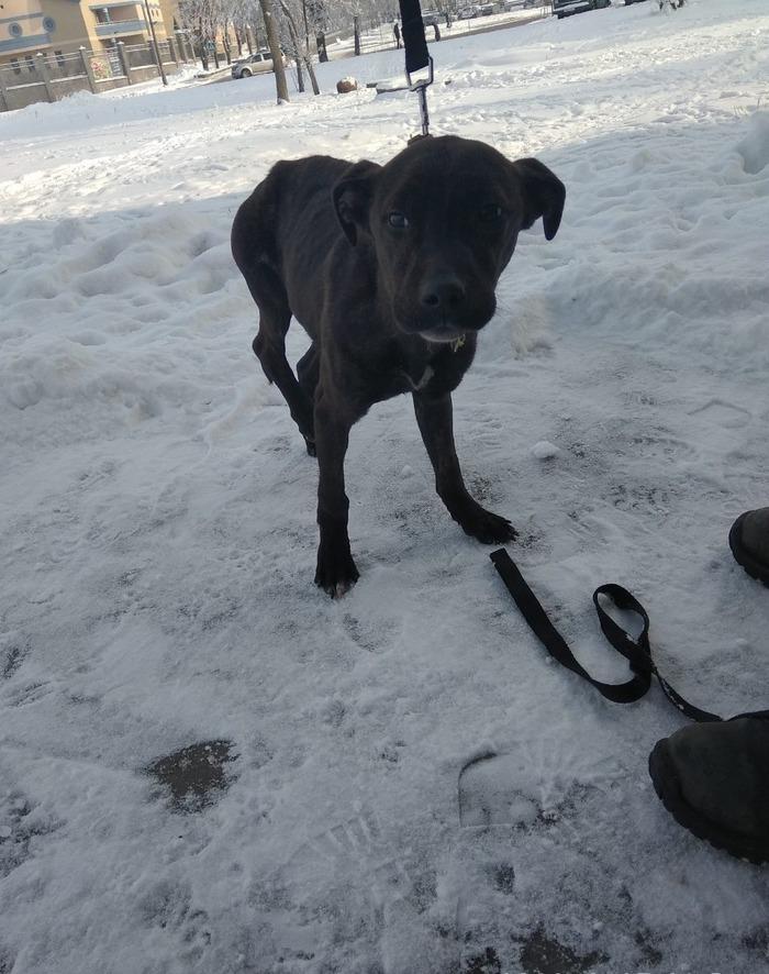 В поле был найден истощенный щенок Беларусь, Гродно, Помощь животным, В добрые руки, Собака, Спасение животных, Передержка, Длиннопост, Без рейтинга