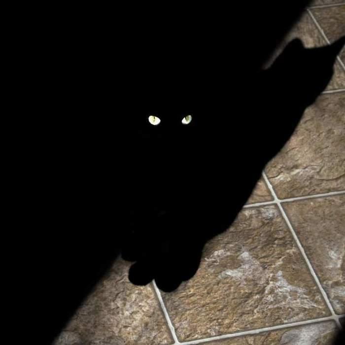 Чеширский Кот: Начало