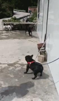 Пустите меня, я ему втащу!