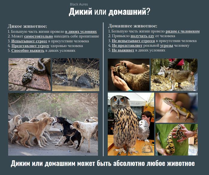 Их нельзя просто взять и вернуть в природу Бродячие собаки, Экзотические животные, Зоошиза, Дурацкие законы, Дикие животные, Домашние животные, Длиннопост