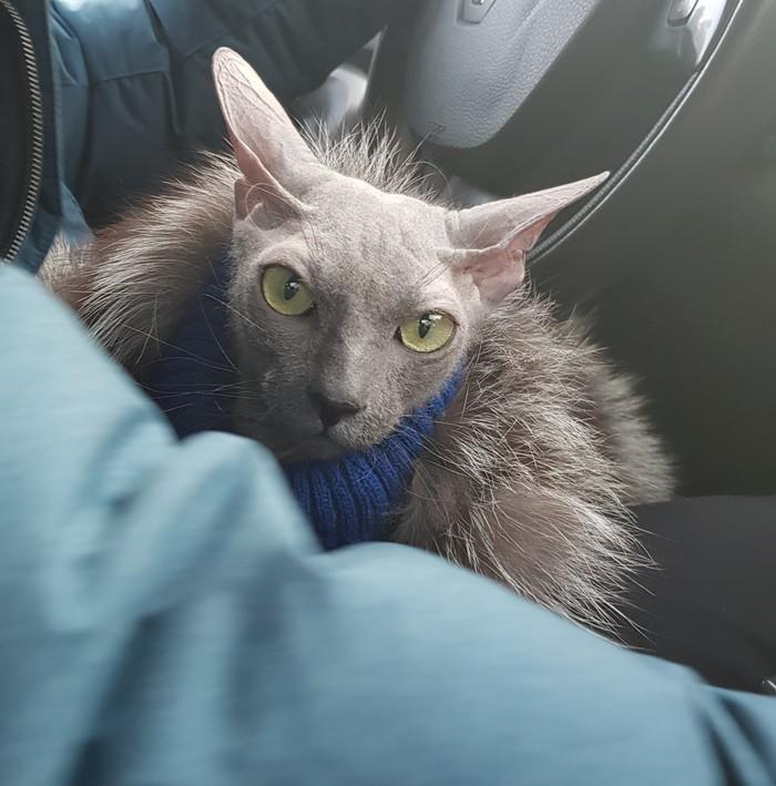 Присядем на дорожку Кот, Шуба, Поездка, Длиннопост