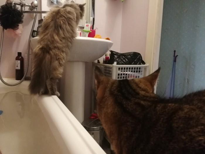 Мои девочки. Трехцветная кошка, Кот, Ванна, Домашние животные, Длиннопост
