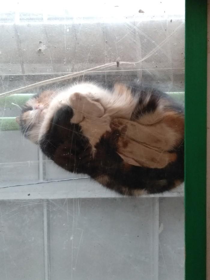 Спящий котэ Тихий час, Рабочие моменты, Кот