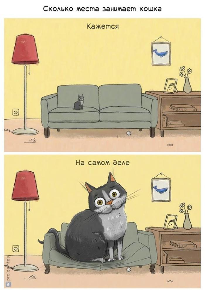 Маленькая кошка.
