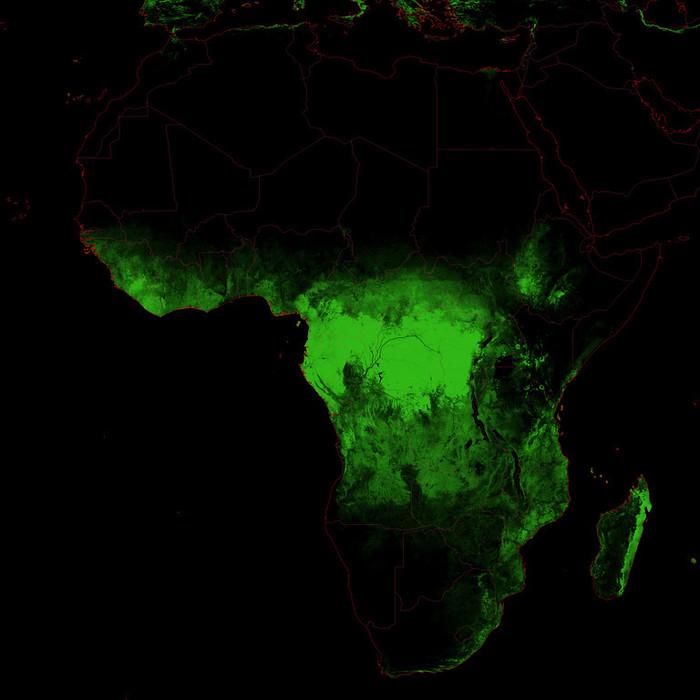 Карты лесного покрова. По материкам, странам отдельно. Высокое разрешение Карта мира, Лес, География, Карта России, Географическая карта, Длиннопост