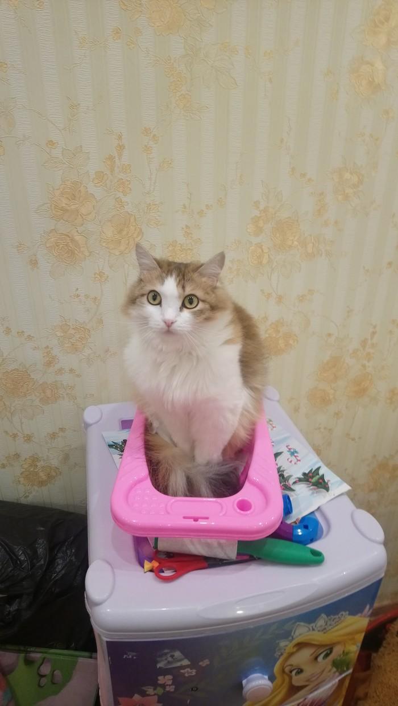 Обжил ванночку Кот, Милота, Длиннопост