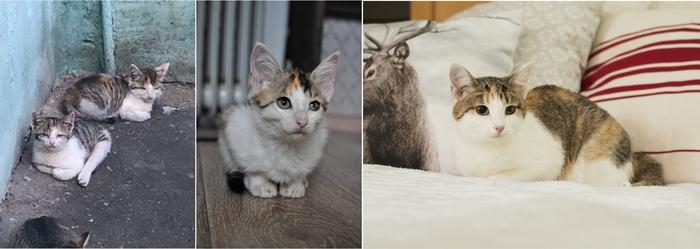До и после Котята, Спасение животных, Приют для животных, Челябинск, В добрые руки, Котомафия, Кот