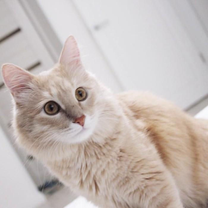 Пожалуйста, помогите! Пропал кот! Волгоград [Найден] Кот, Волгоград, Потерялся кот, Помогите найти, Без рейтинга