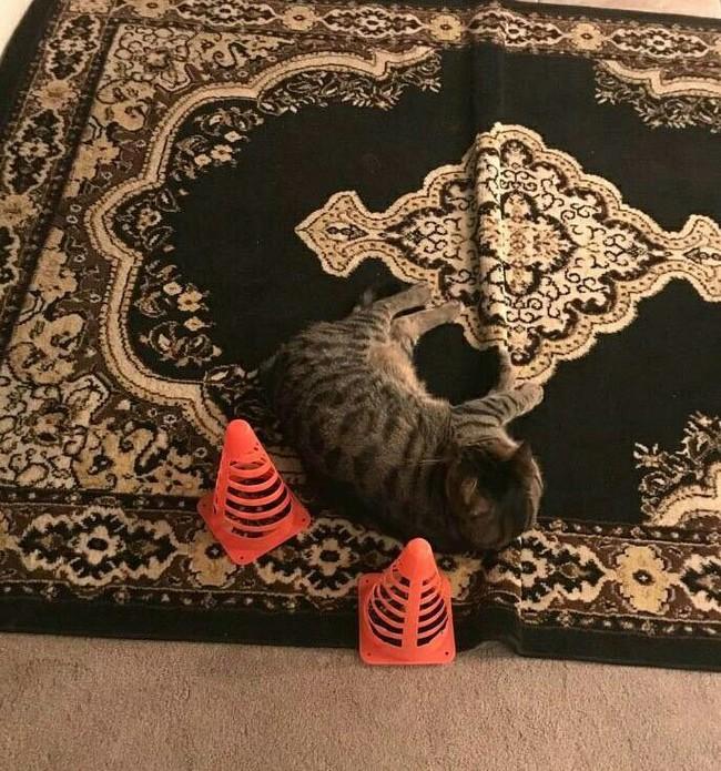 """""""Мама волновалась, что кто-нибудь наступит на кота, не заметив его на ковре"""""""