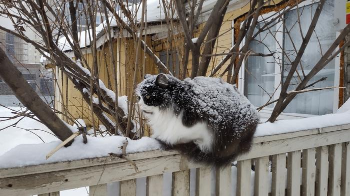 Заснеженный котик Уфа, Кот, Зима, Снег