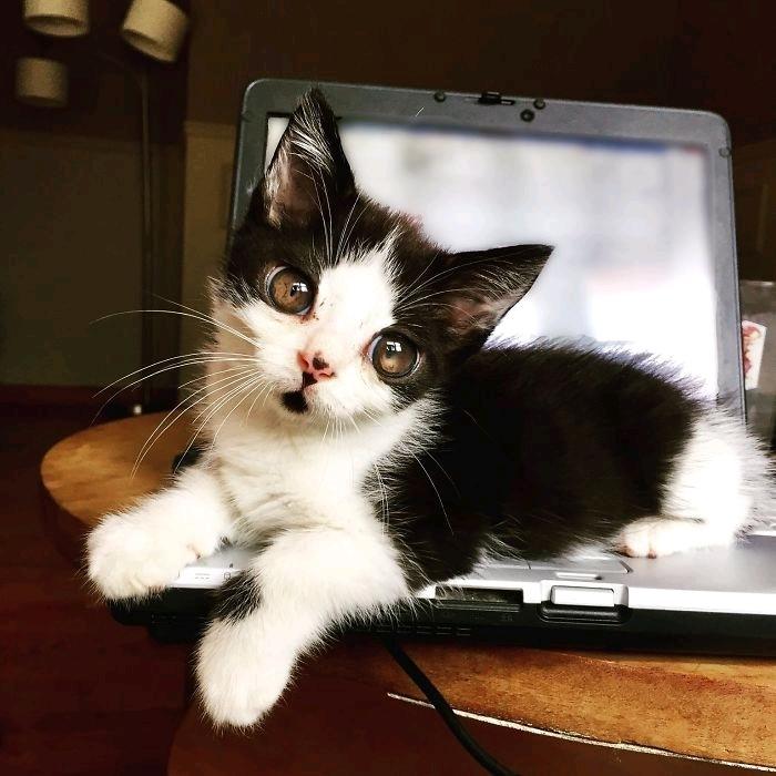 Кот с очень большими глазами:) Кот, Котомафия, Милота, Глаза, Взгляд, Длиннопост